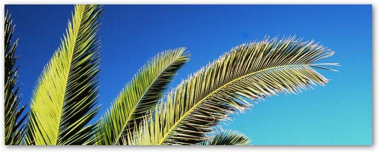 Daruber Hinaus Erhaltet Ihr Im Online Shop Drachenbaume Yuccas Zitruspflanzen Cycadeen Agaven Farne Und Bambus Das Bekannteste Exemplar Der Caudex